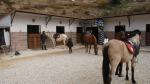 Boxes. Centro Hípico Marbella DIAMA